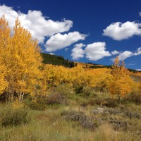 Photo: Aspens Invading