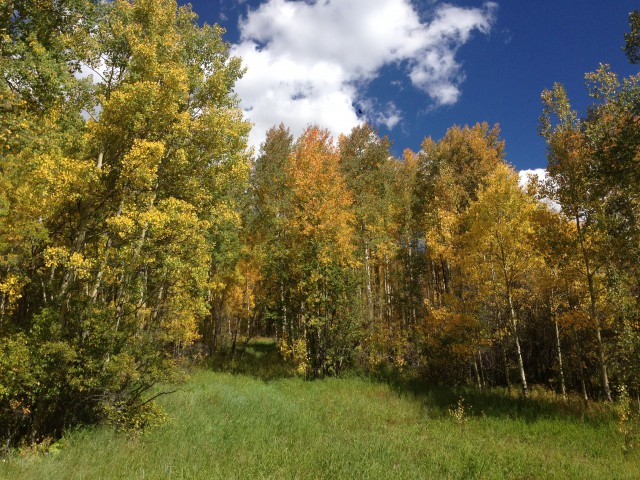Photo: Aspens are Turning