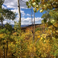 Photo: Valley of Aspens
