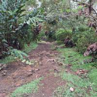 Hike to Cerro Chato